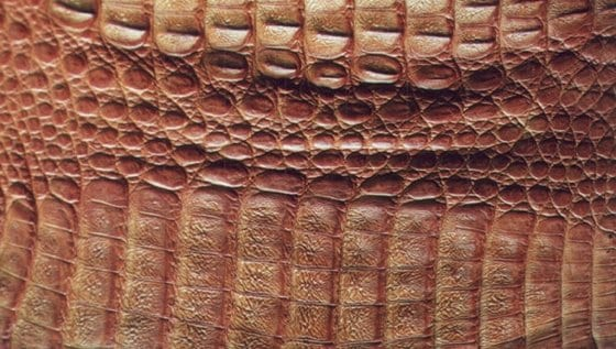 Hoe herken je echt krokodillenleer? flank kaaiman